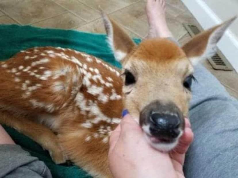 deer-5 [www.imagesplitter.net]