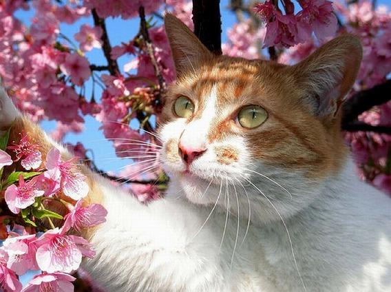 cherry_blossom_tree_cats_05