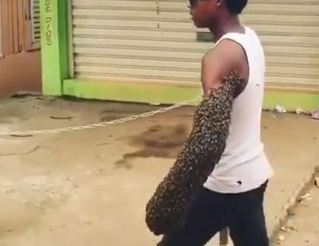 養蜂家がミツバチを運ぶ方法