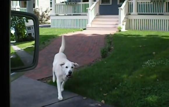 かわいすぎかよ!毎日郵便局員からお手紙をもらい家に届ける犬