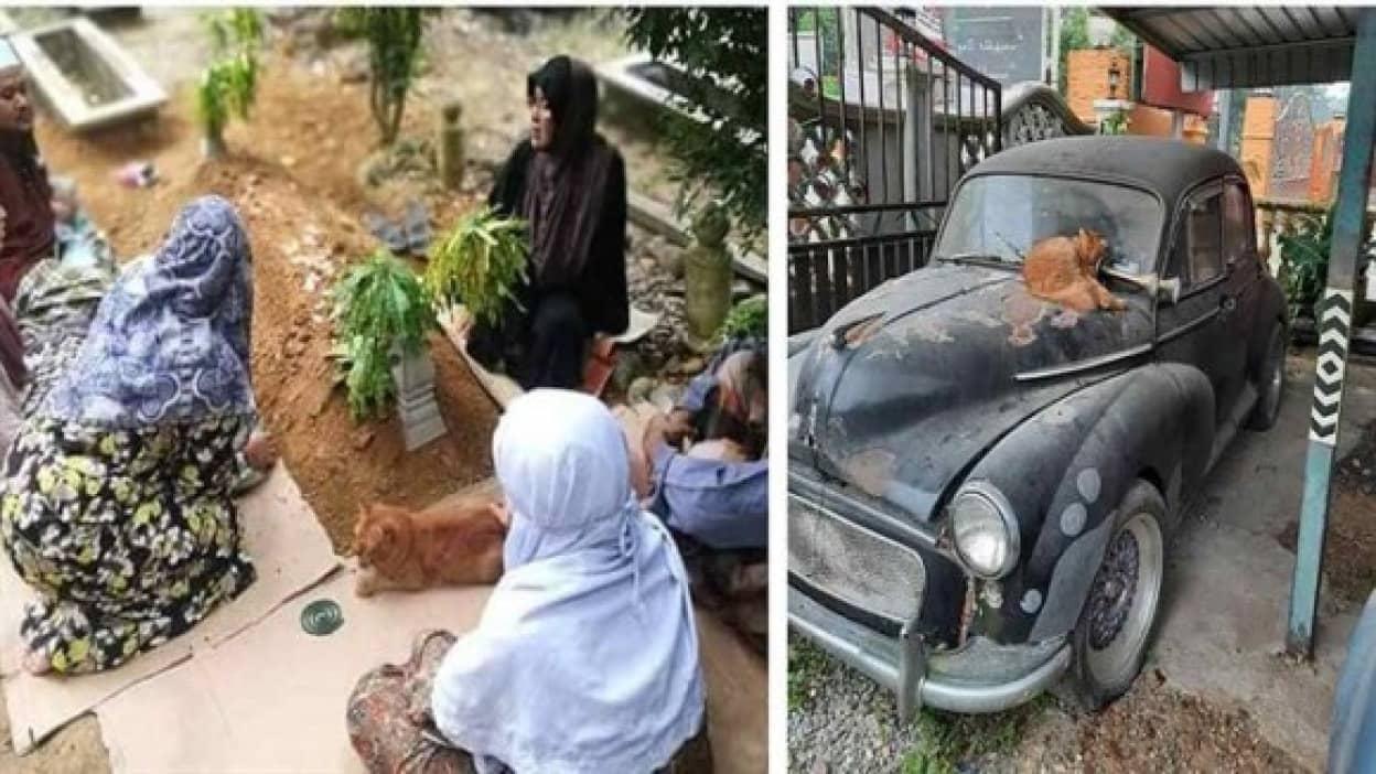 飼い主亡き後2年間墓参りを欠かさない猫