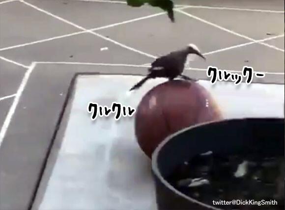 バスケットボールと鳥