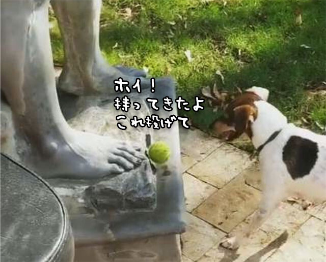 ダビデ像と遊びたかった犬