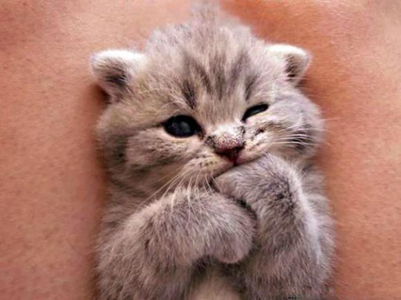 悶える可愛さ!猫の赤ちゃんの高画質画像まとめ!