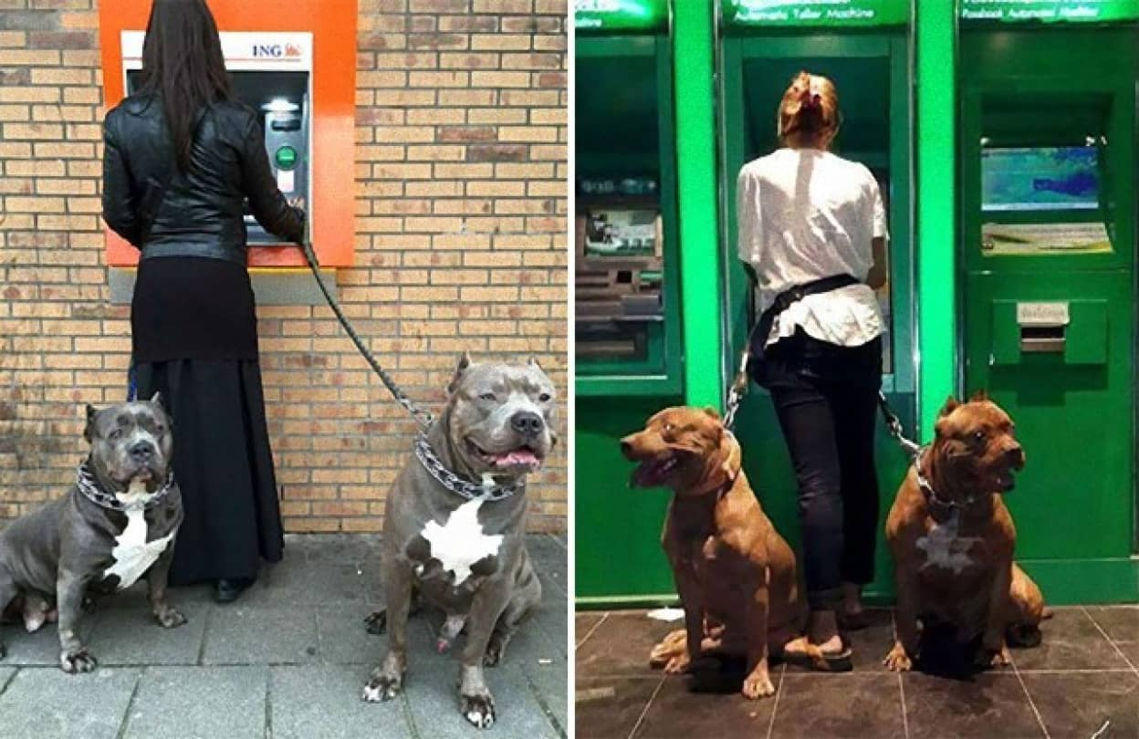 ATM強盗から飼い主を守ってくれる強そうな犬たち