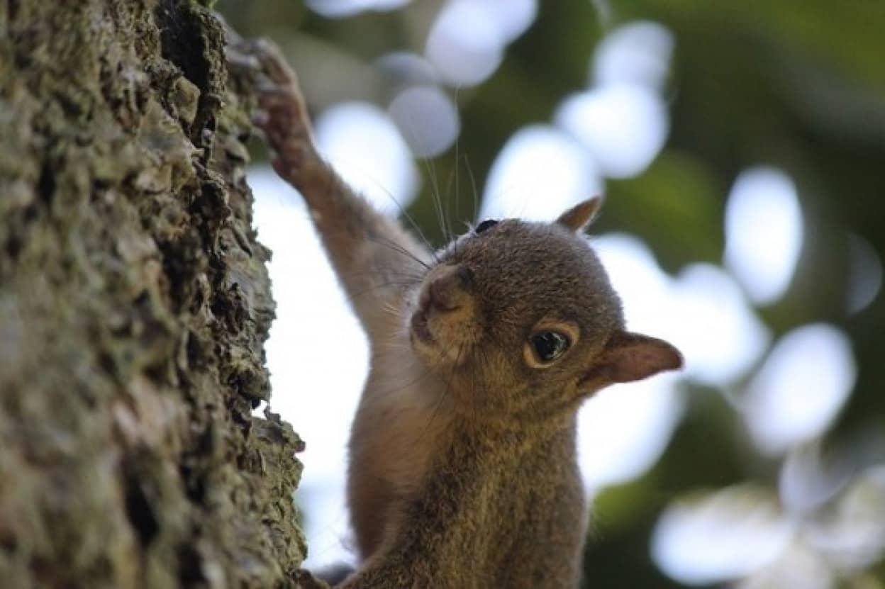 squirrel-3009175_640_e