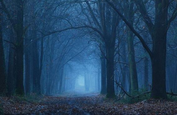 fog_30