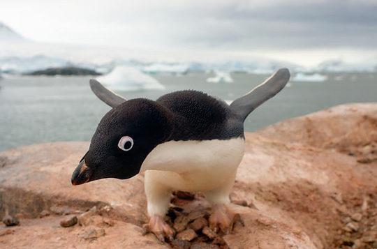 penguins_04
