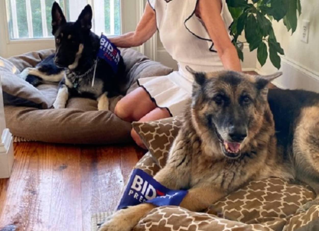 ジョー・バイデンの飼い犬に注目が集まる