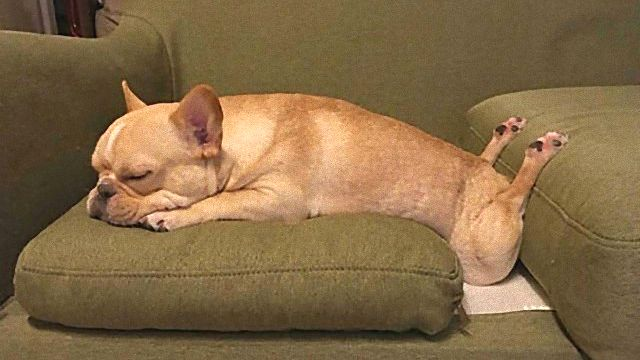 やらかしちゃってごめんなさい。思わず脱力するっきゃない犬の面白画像集