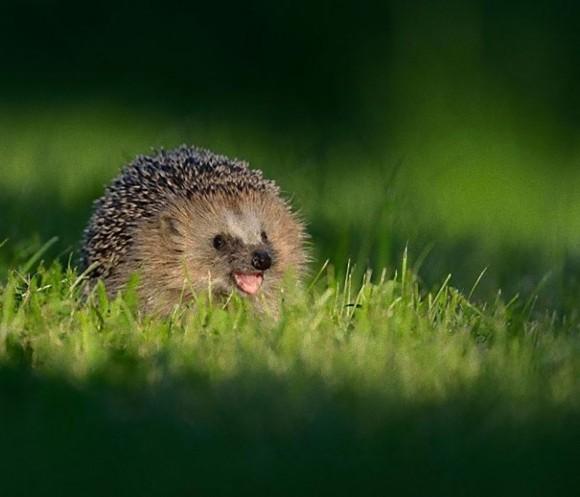 cute-smiling-animals-5_e_e