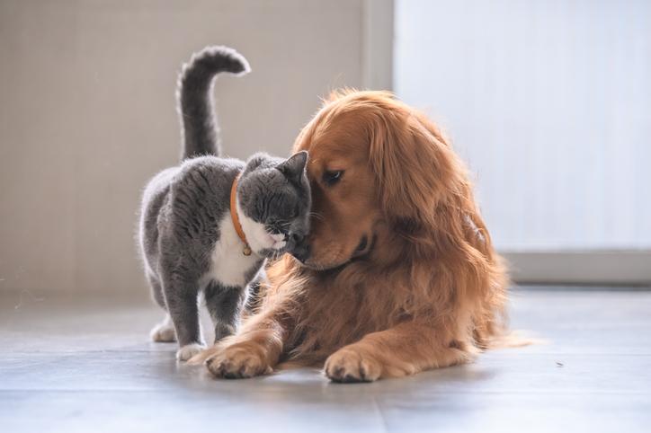 犬と猫、どっちが賢い?は愚問である。それぞれの生き方に適応した知性がある