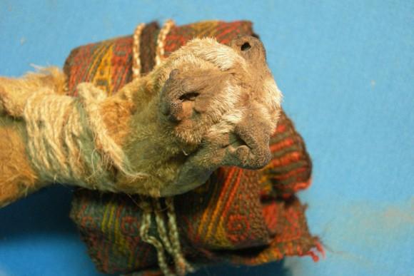 シャーマンの儀式に使用か?約1000年前の向精神薬が入った袋が発見される(ボリビア)
