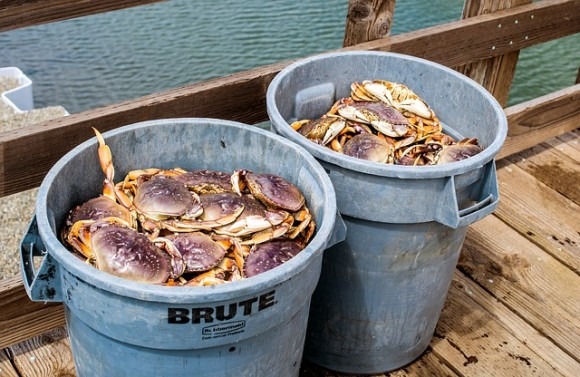 fresh-dungeness-crab-3420562_640_e