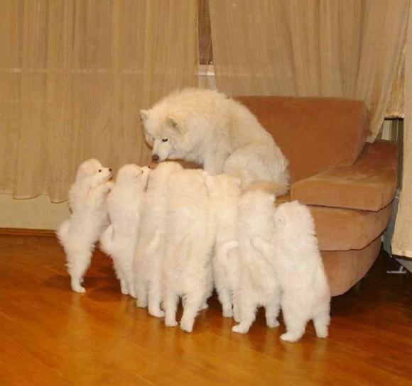 犬の親子の心温まる写真が集められていた。お母さんの表情からは、「こんなにかわいい 子がたくさん産まれたのよ!」っていう自信とそしてたっぷりの愛情がうかがえる。
