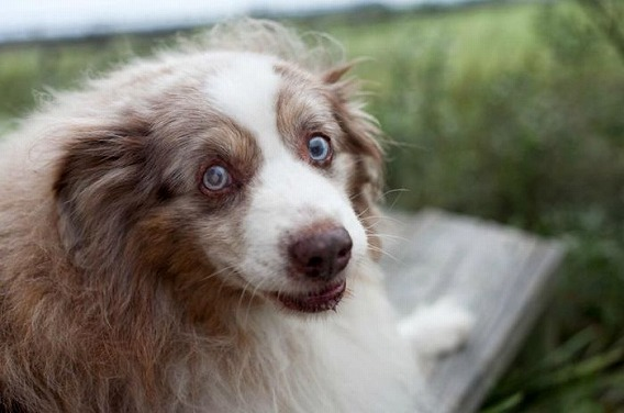 old_dogs_31