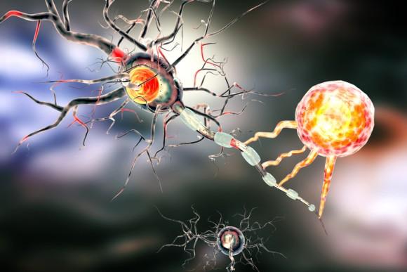 死後脳内で活発化するゾンビ遺伝子