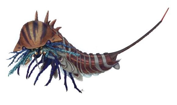 5億年前の海に生息していた小さきプレデターの正体が明らかに(カナダ研究)