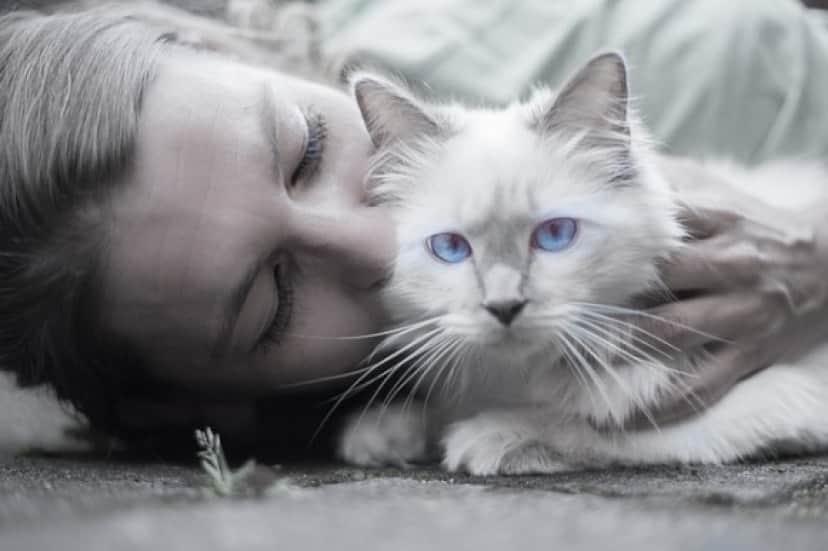 cat-1423844_640_e