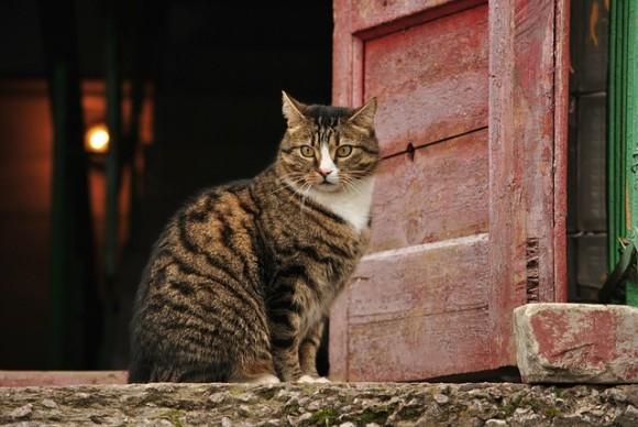 死んだはずの猫が生きていた!交通事故にあった飼い猫を火葬した数日後、フラッと家に現れる