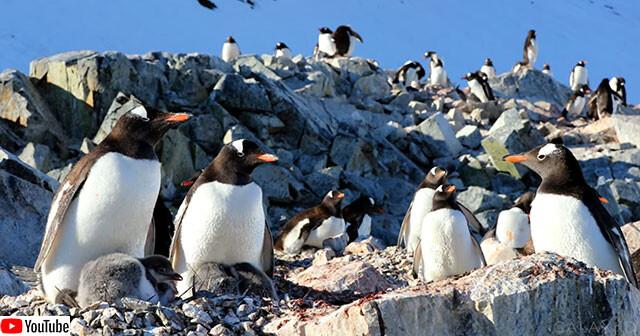 南極半島の美しい自然を堪能できるドキュメンタリー映像