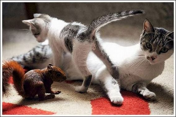 cats_and_squirell_07