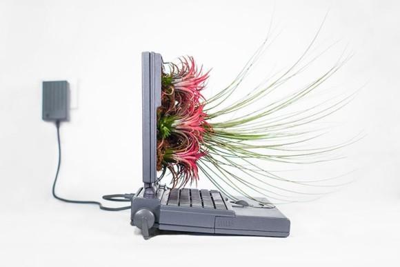 枯れ木に花を咲かせるように、古くなったApple製品にも草花を生やそうの会