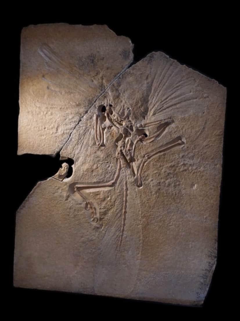 archeopteryx-911017_1280_e
