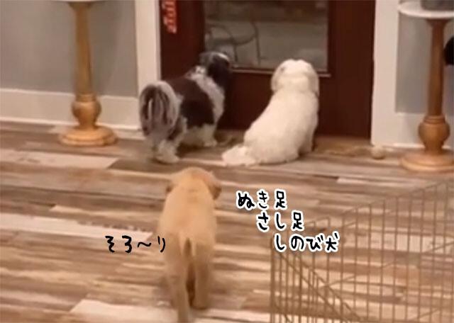 背後から忍び寄り仲間の犬を驚かせるおちゃめな犬