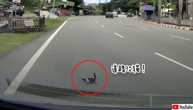 道路の猫が突然消えるミステリー