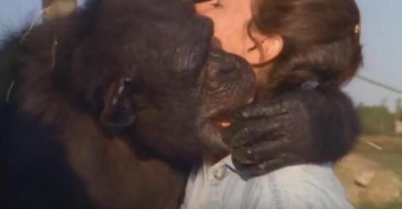 もう涙しかない!20年以上前に自分を救い出してくれた人間と再会。目に涙を浮かべ全身全霊で喜びを表すチンパンジー