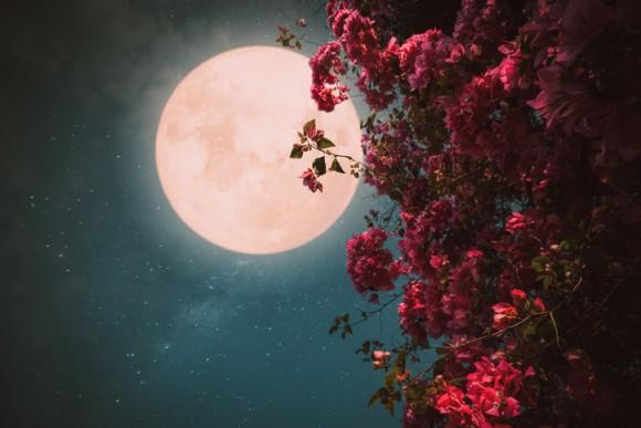 5月の満月は「フラワームーン」5月7日に夜空を見上げて月に願いを