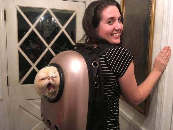 宇宙船型キャリーバッグに入った猫の表情があまりにも悲惨すぎたのでコラ職人頑張る