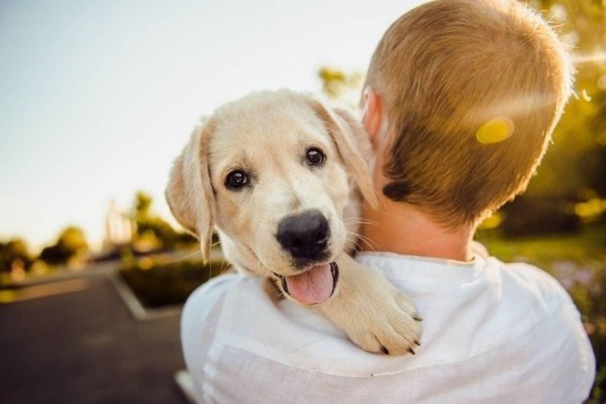 犬と人間の絆がわかる、幸せになれる画像