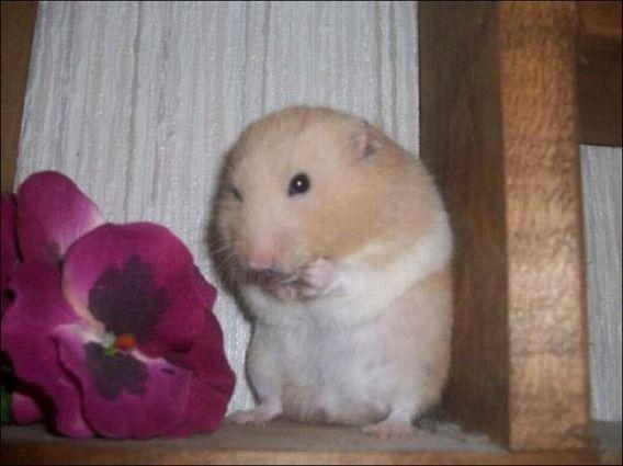hamsters_05