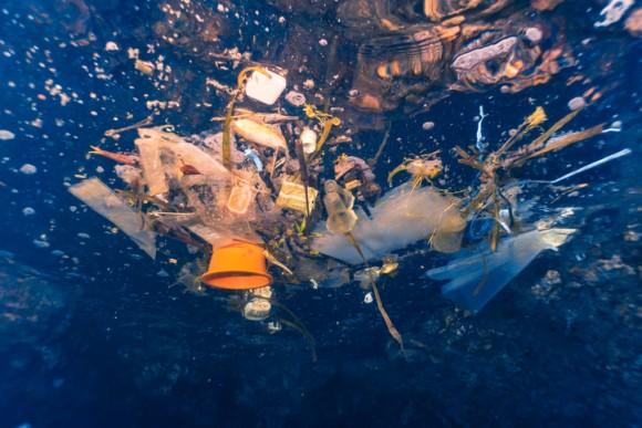 東北地方太平洋沖地震から8年。今もなお、日本の津波でさらわれたゴミに乗って海洋生物がアメリカに流れ着いている