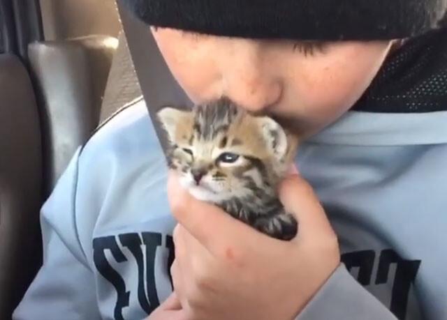 母親に捨てられ保護された子猫と少年の間に絆が生まれた瞬間(アメリカ)