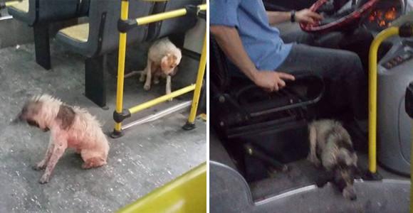 嵐の中びしょ濡れになっていた野良犬を乗せたバスの運転手、車内で広がるやさしさの連鎖(アルゼンチン)