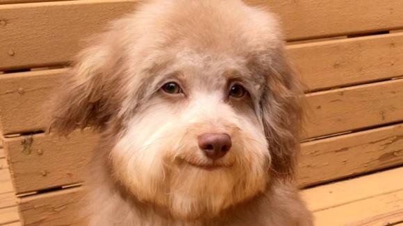 犬がどんどん人化している?またしても発見された人面犬(アメリカ)