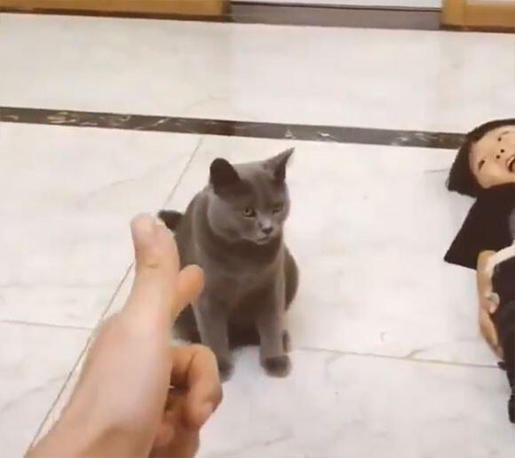 ならば付き合おう。少年に引き続き、死んだふりの演技をする猫