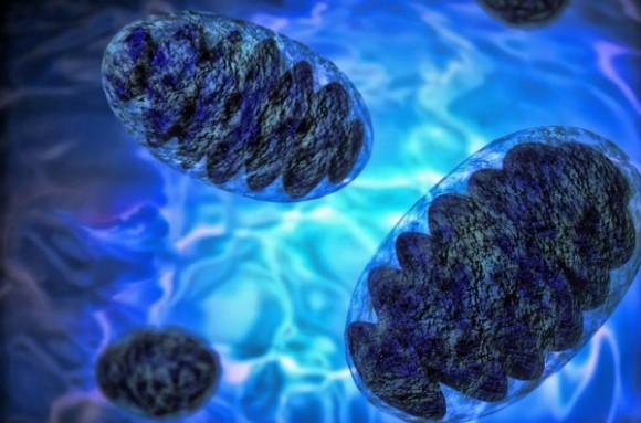 前代未聞の大発見か?ミトコンドリアなしでも生きられる微生物が発見される(カナダ研究)