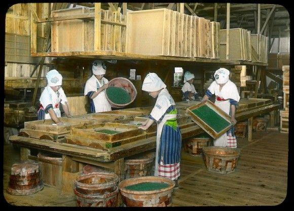 1900年代初期、江南信國が撮影した静岡県のお茶の生産写真の手彩色写真