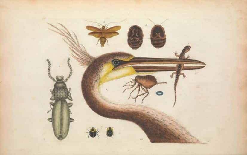 biodiversity-4-960x603@2x_e