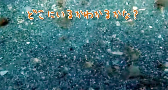 見抜けたら神。完璧なるカモフラージュで人の目を欺く魚の「ふふふ、探してごらん」