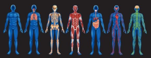 我々の体についた脂肪のほとんどは、息を吐くときに一緒に吐き出されていることが判明。(オーストラリア研究)