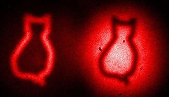光の明暗による猫の像の輪郭はシリコンを彫って作られた形が像になったものだ。それぞれの像は量子干渉による強め合い、あるいは弱め合いによって生まれる。