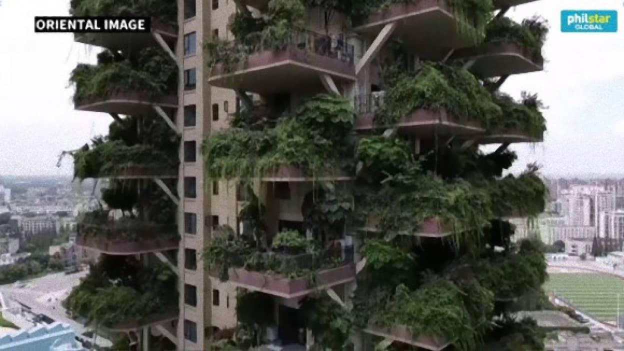 蚊の襲来でジャングル化したマンション