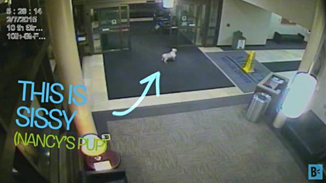 「ご主人見つけた!会いたかったよ!」飼い主の入院している病院を探し当てた犬