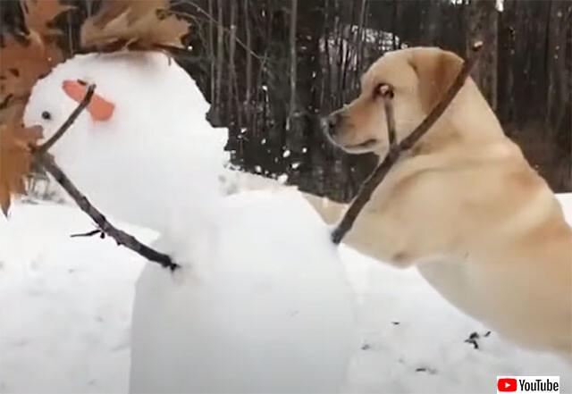 雪だるまは敵!全力で破壊していく破壊王としての犬