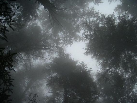 fog_25